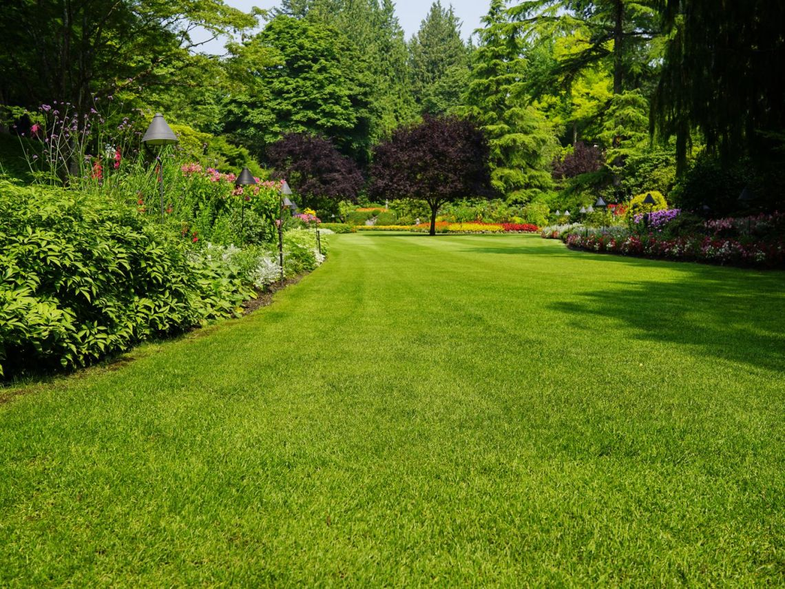 How To Grow Grass Fast This Old House