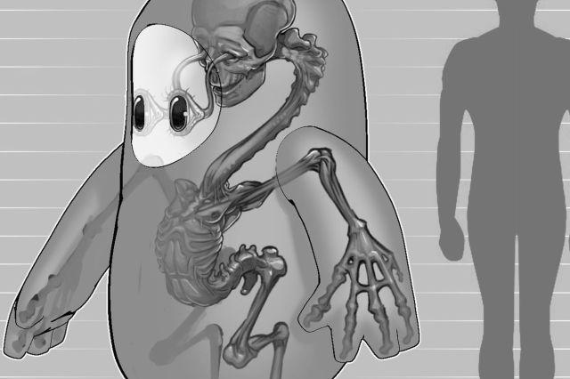 Fall Guys anatomy
