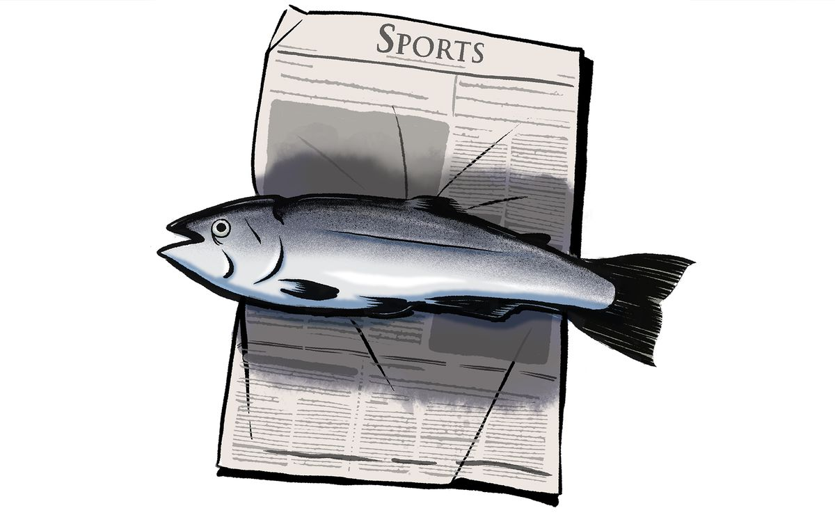 Illustration of a full uncooked salmon resting on top of the sports section of a news paper.