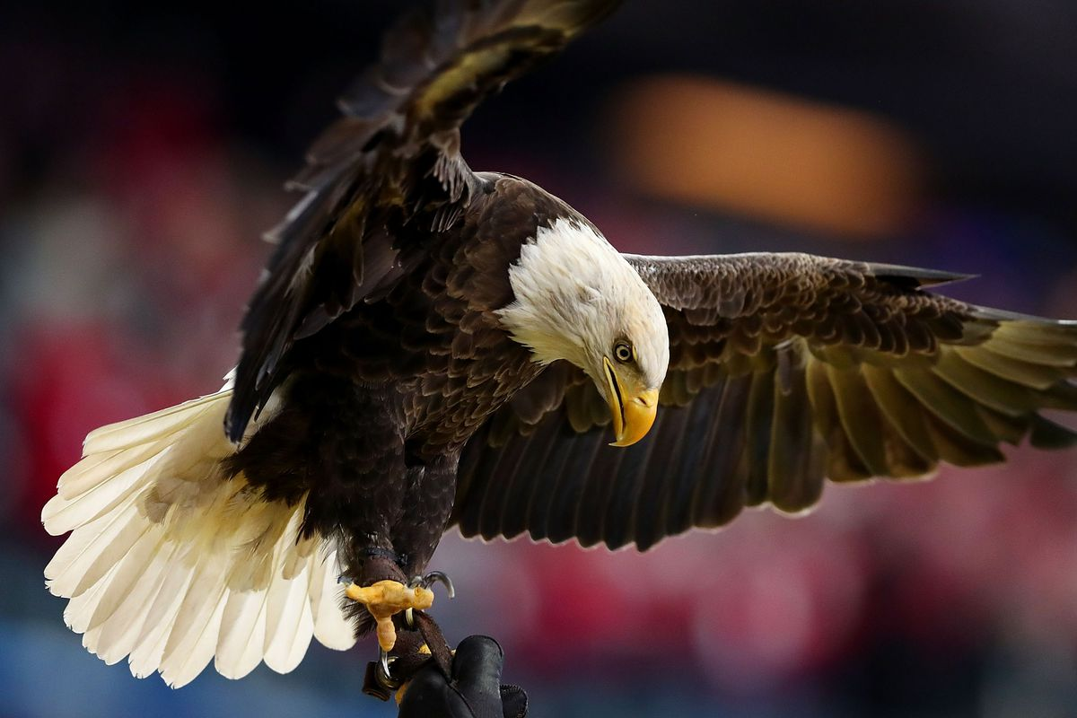 A Newly Proposed Bill Targets Endangered Species May