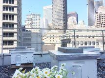 Rooftop Hotel San Francisco