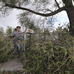 Amanda Sanchez moves fallen tree branches in front of her home in the Liberty Wells neighborhood in Salt Lake City on Tuesday, Sept. 8, 2020. A windstorm caused widespread damage across northern Utah.