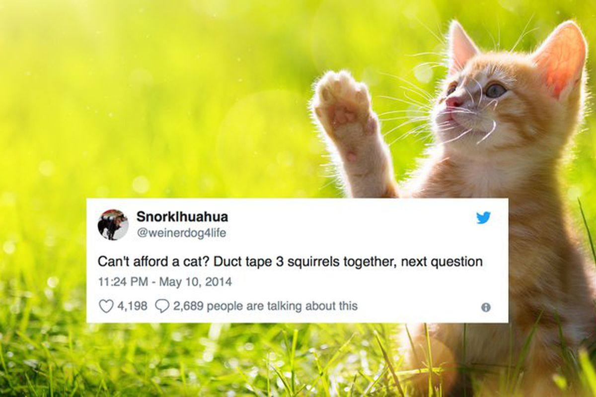 the funniest tweets about