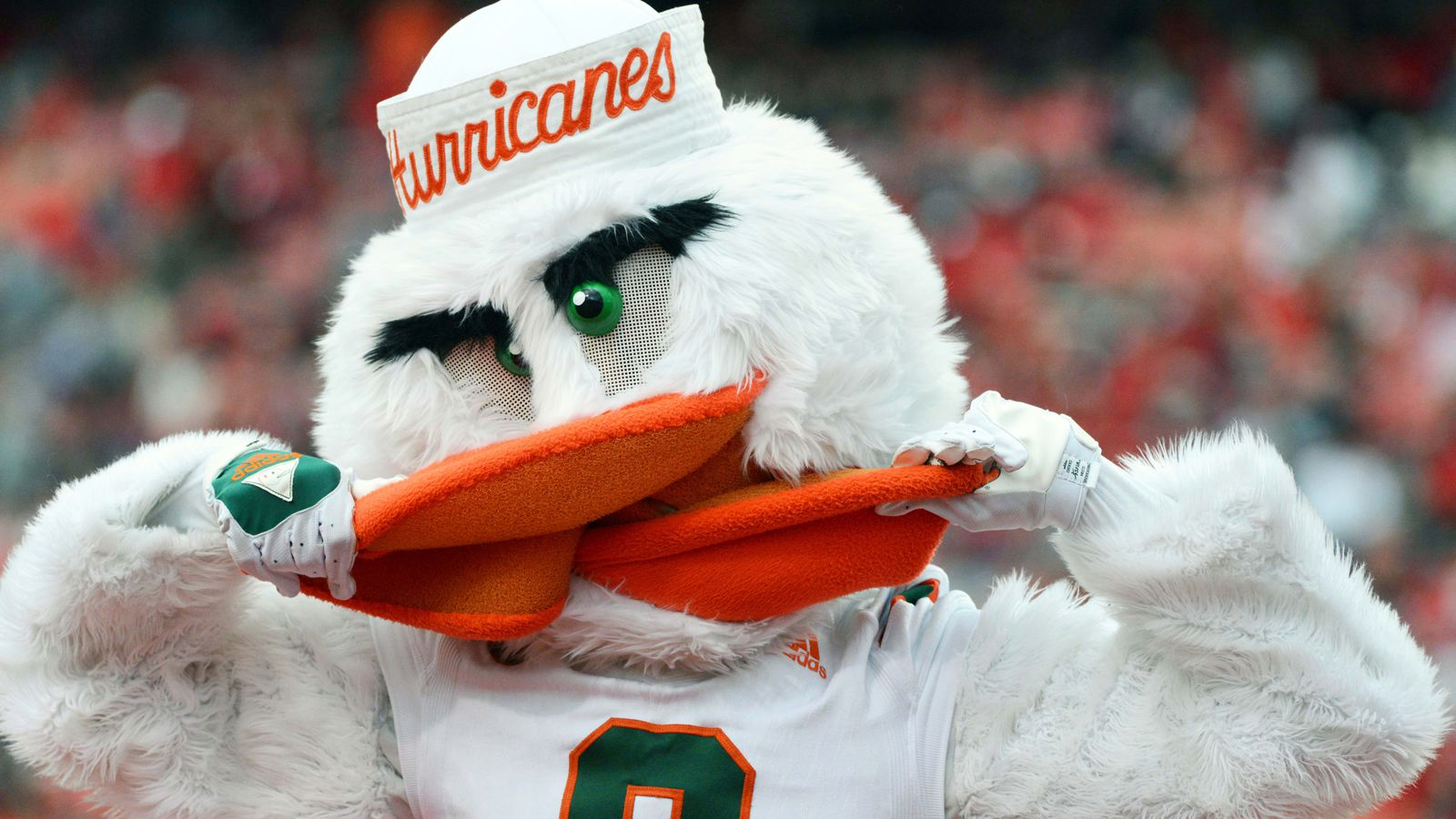 8 Reasons to Hate the Miami Hurricanes  The Only Colors