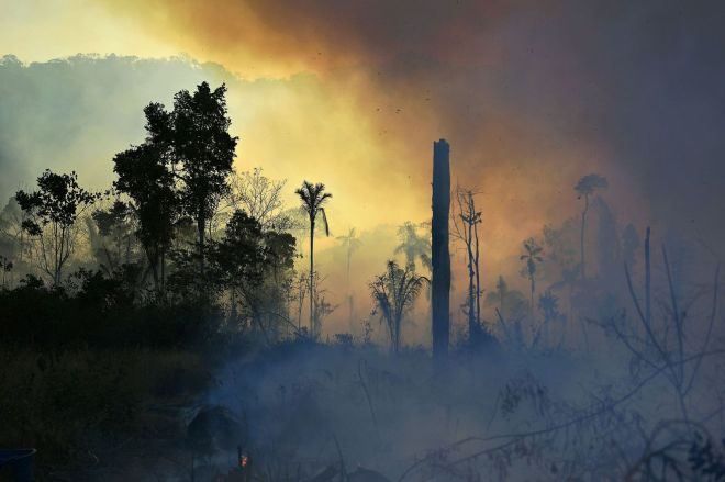 1228063125.0 Amazon rainforest fires got even worse last year | The Verge