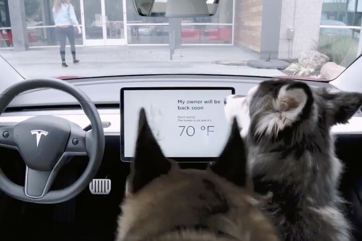 Tesla fixed its dangerous Dog Mode bug  The Verge