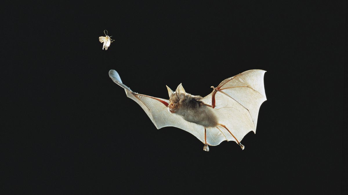 How the coronavirus outbreak likely started with a bat - Vox