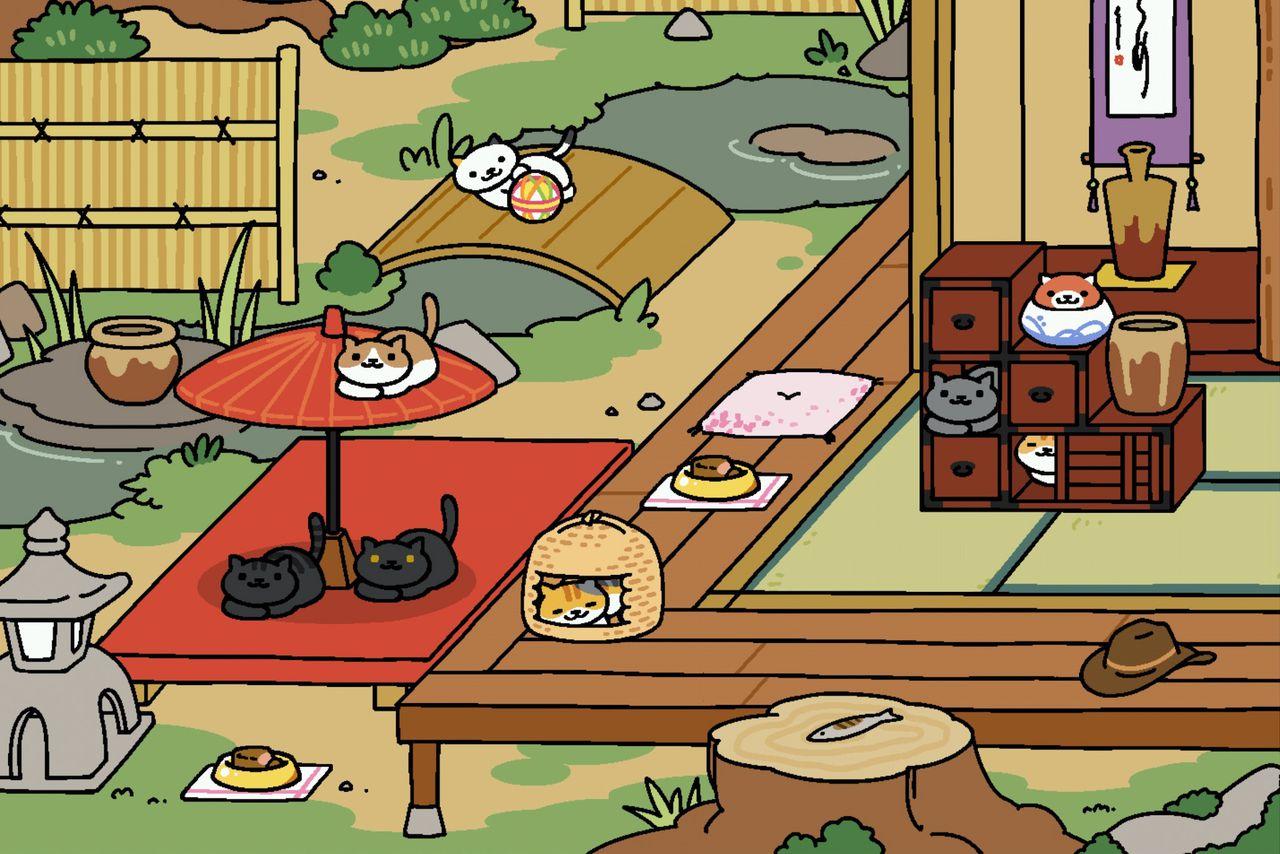 cute cult cat collecting