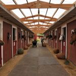 Visiting New York City S Last Horse Stables Curbed Ny
