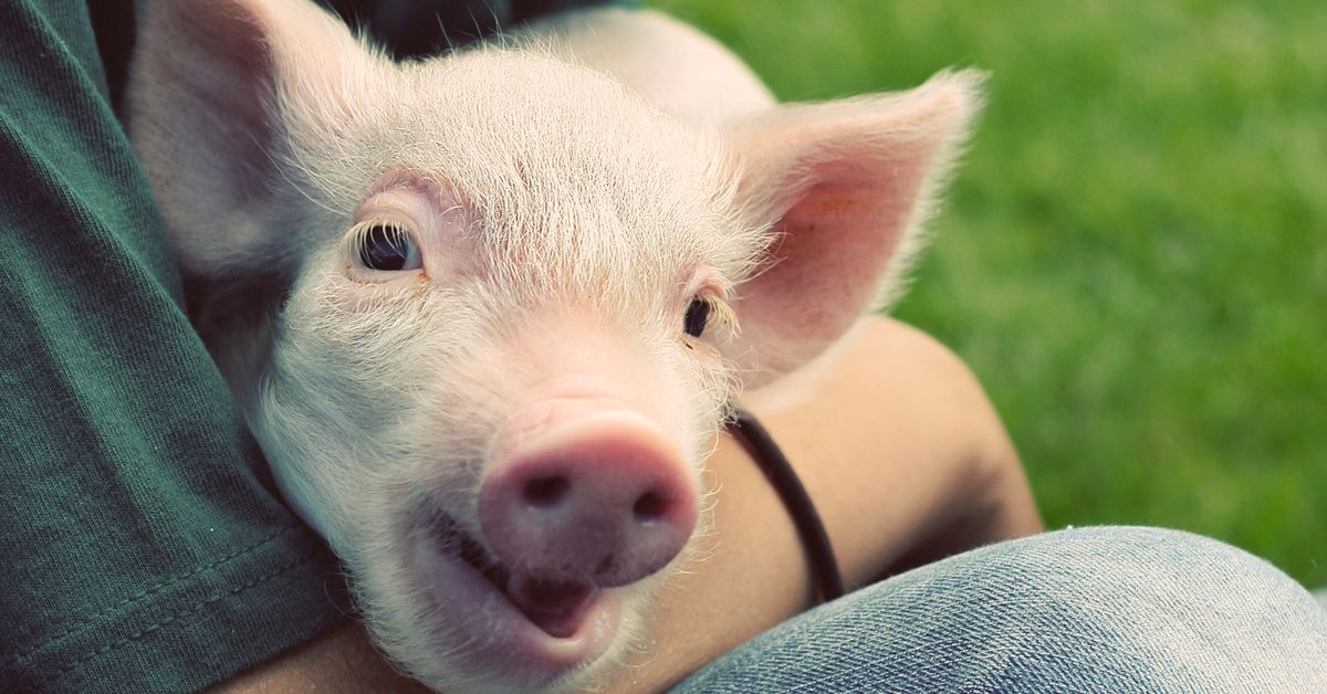 The best charities for helping animals