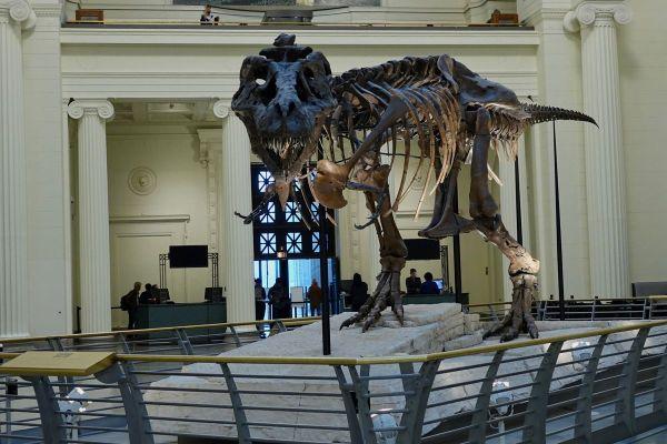 Field Museum Moving Sue T. Rex Visit