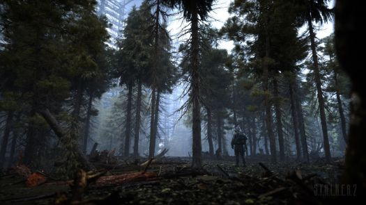 A character stands in a dense forest from STALKER 2