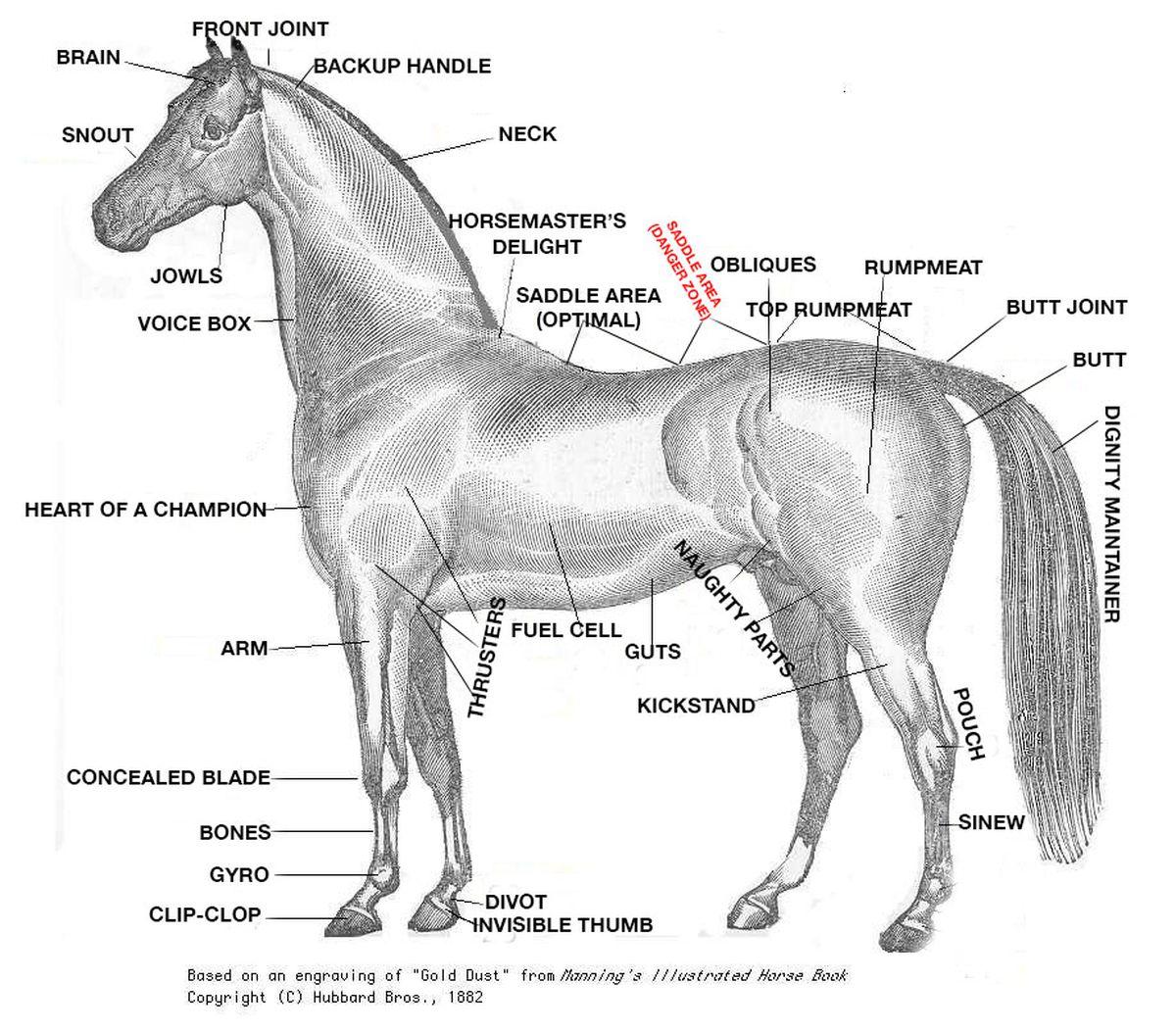 A Crash Course In Horse Anatomy For The Kentucky