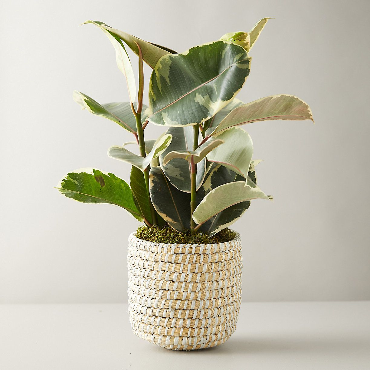 Buy Indoor Plants Online At These Stores Curbed