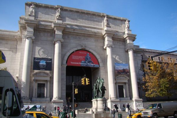 American Museum Of Natural History Finish