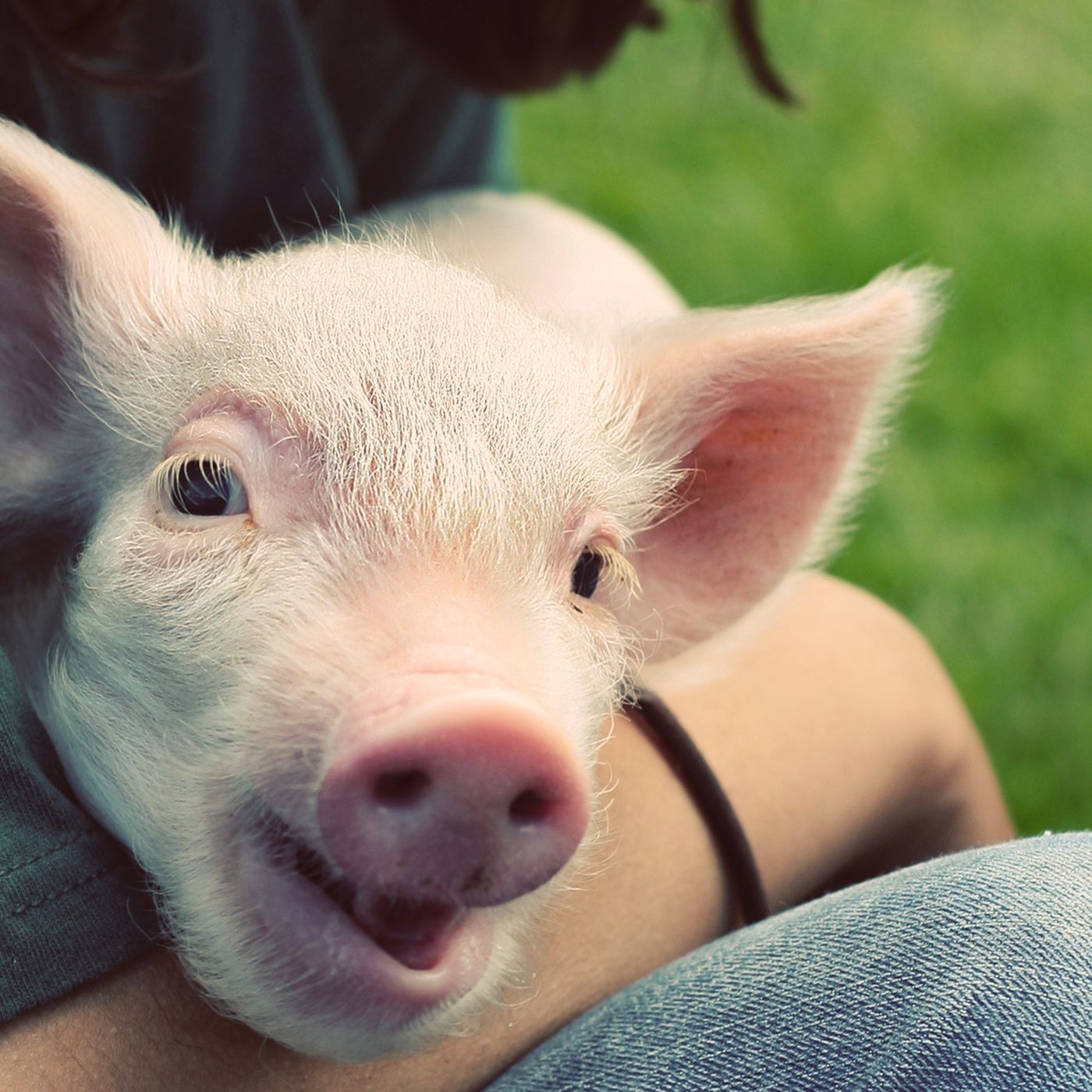 The Best Charities For Helping Animals Vox