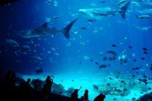 Georgia Aquarium Plans Major Expansion Open In 2020
