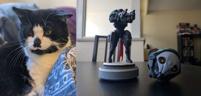 A picture of a tuxedo cat next to a picture of a broken Warframe bobblehead