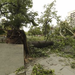 A large tree blocks the street after high winds blew through Salt Lake City on Tuesday, Sept. 8, 2020.