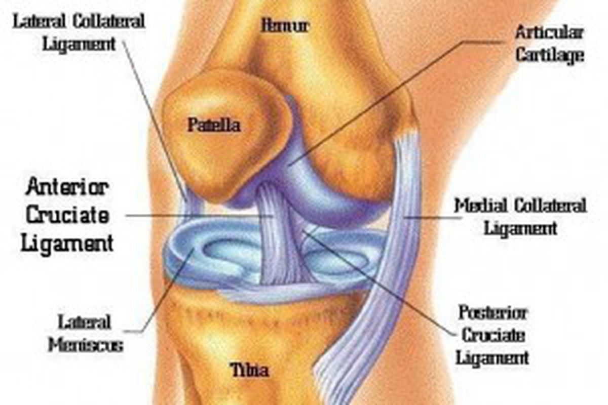 diagram of the knee and ligaments split ac unit wiring jeff tuel 39s injury mechanical problems it causes