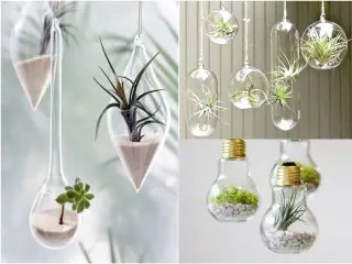 Envase de Vidrio Decorativo Plantas de segunda mano en