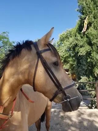 Cabezada caballo  riendas  filete de segunda mano por 50