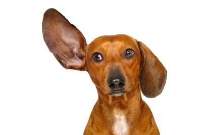 犬笛とはどんな時に使うのか   わんちゃんホンポ
