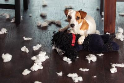 「犬 困った 写真 フリー」の画像検索結果