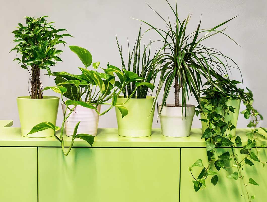 Pflanze Fürs Schlafzimmer  Altrosa Wandfarbe Verleiht Dem