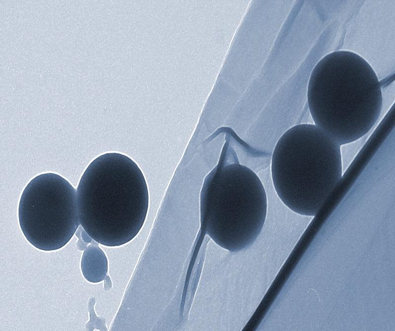 Desarrollan nano-alimentos del futuro a partir de suero de leche - desarrollan-nano-alimentos-del-futuro_1-800x670
