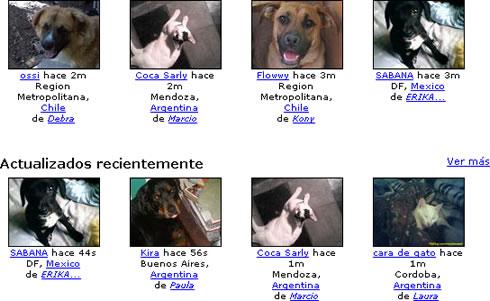 fotolog mascotas Petflog, Crea un Fotolog para Tus Mascotas