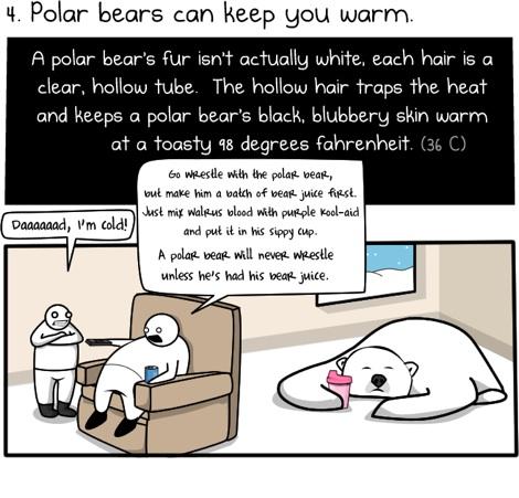 Seis razones para ir en Oso Polar al trabajo - 6-razones-para-montar-un-oso-polar-para-trabajar-3