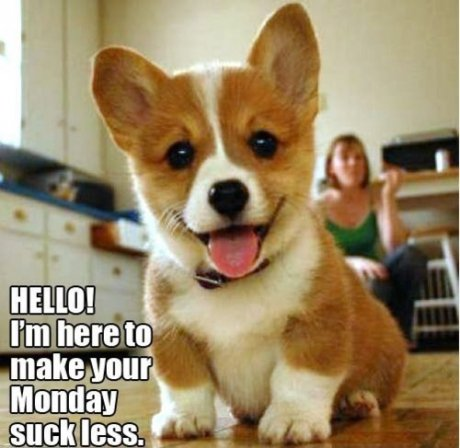 Image result for monday fail
