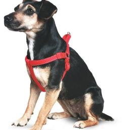 ancol heritage reflective padded nylon dog harness  [ 800 x 1024 Pixel ]