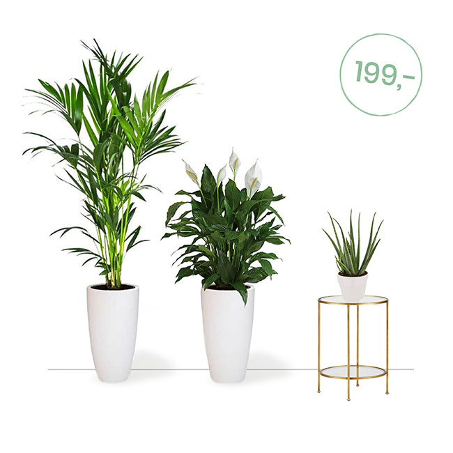 Planten kopen Mooiste kamerplanten online bestellen