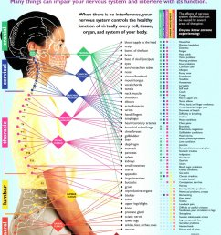 nerve function chart bloomington il bloomington normal spine clinic 309  [ 970 x 1259 Pixel ]