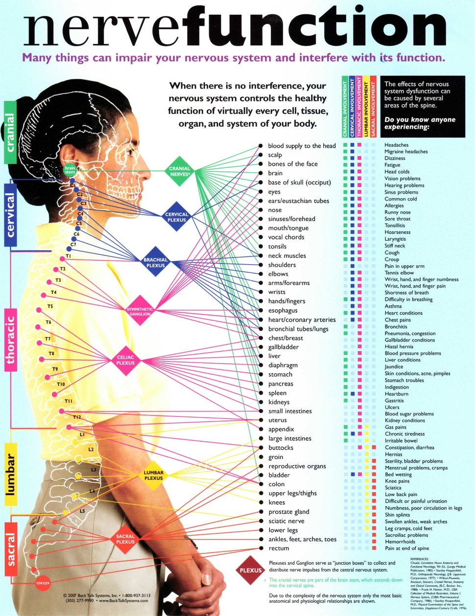 hight resolution of nerve function chart bloomington il bloomington normal spine clinic 309
