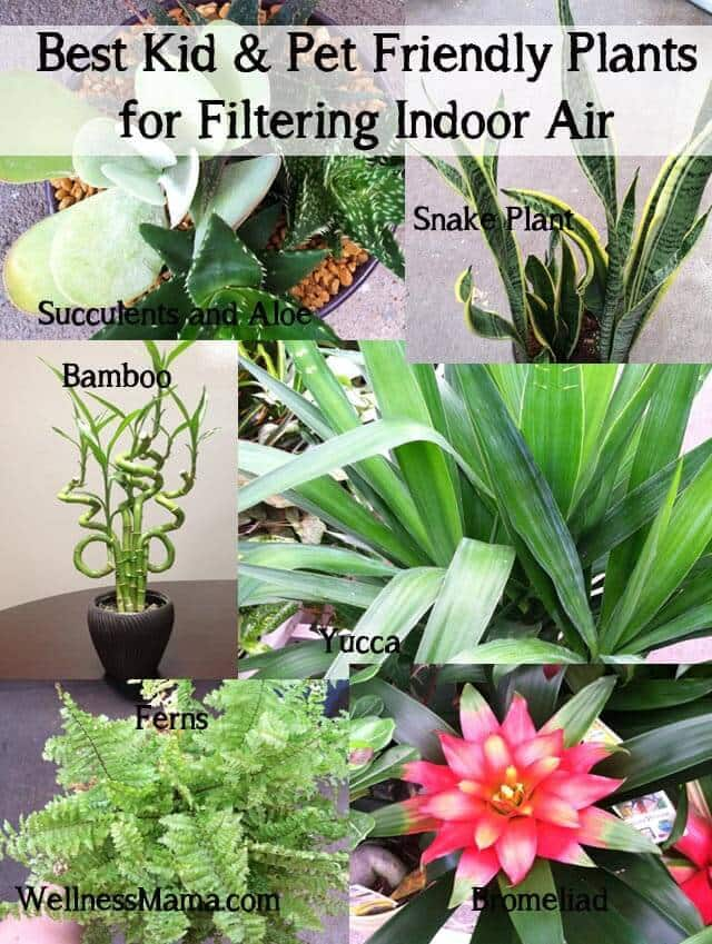 How To Filter Indoor Air With Plants Wellness Mama