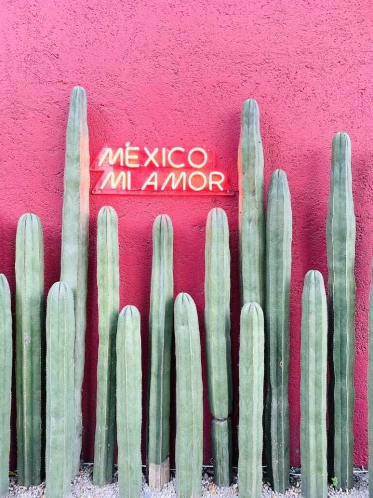 Gaby's Guide to Mexico City (@whatsgabycookin)