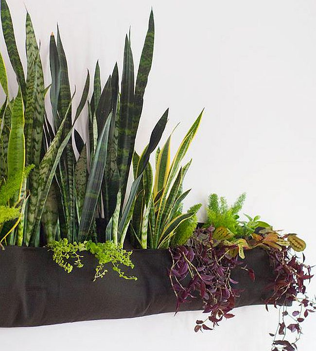 The Perfect Indoor Gardening Ideas