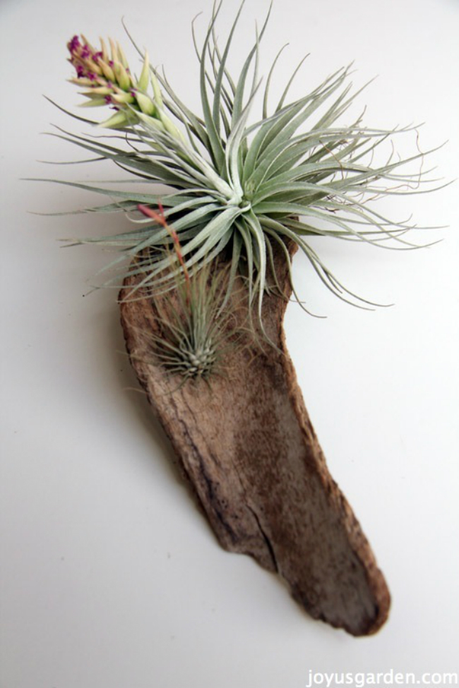 Handmade Air Plant Dcor Ideas to Brighten Your Home