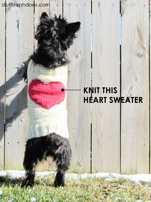 Loom Knitted Dog Sweater Pattern The Best Dog 2018