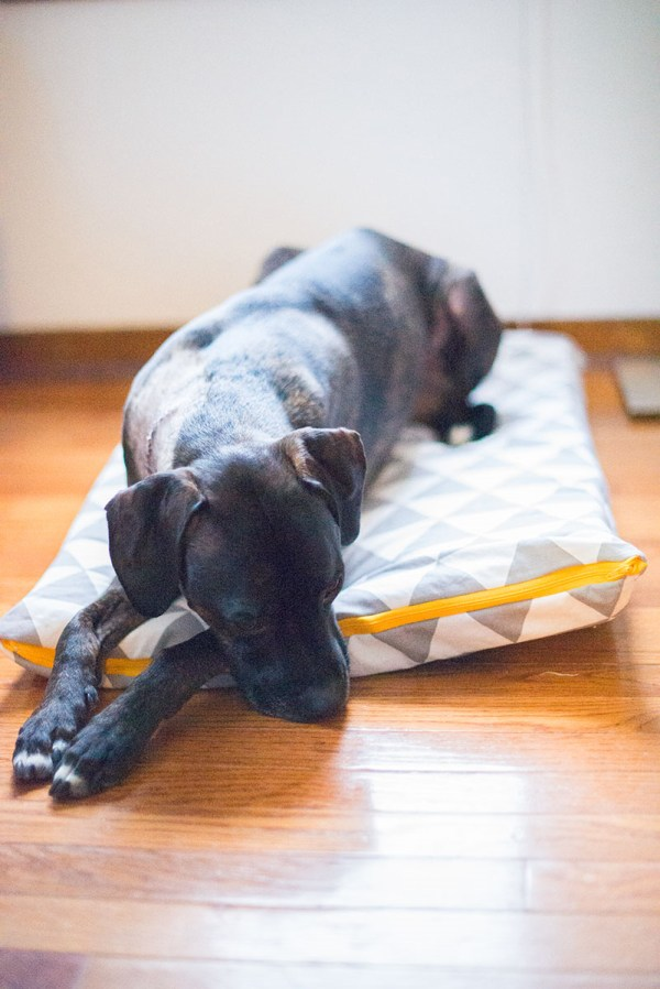 8 Super Cosy And Easy Dog Pillows