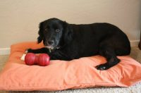 Easy to make Two Pillow Dog Bed - WonderfulDIY.com