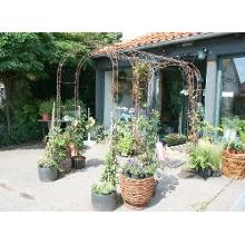 Blumen Verschicken Hildesheim