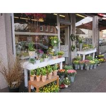 Blumen Verschicken Viersen