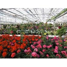 Blumen in Bayern  Blumen versand Bayern und blumen
