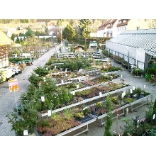 Blumen in Niedersachsen  Blumen versand Niedersachsen und