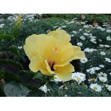 Blumen in Esslingen  Blumen versand Esslingen und blumen verschicken Esslingen  Regionsflorist