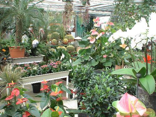 Grtnerei Pflieger  besorgt Blumen und Strue in Filderstadt  Regionsflorist